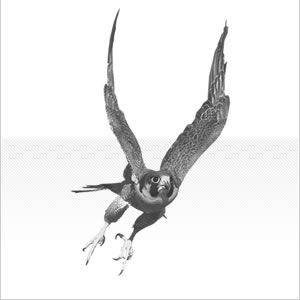 PDM-falcon